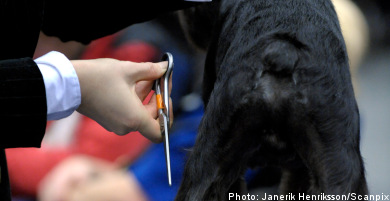 Minister calls for EU ban on tail docking