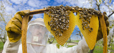 Researchers find key to deadly bee disease