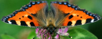 German conservationists call for butterfly census