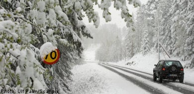 Winter's return causes confusion