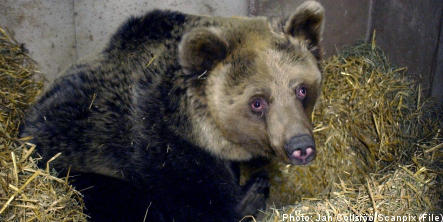 'Bear attack was state's responsibility'