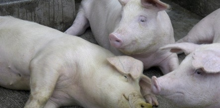 Farmer who killed parents and fed neighbour to pigs loses appeal