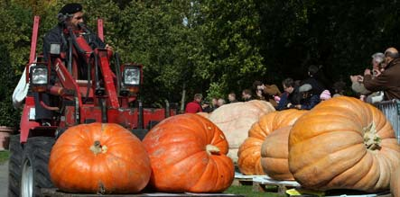 Germany's largest pumpkin weighs in at 604 kilos