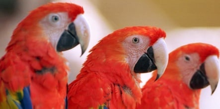 Fake match-maker for depressed parrots stole and sold birds