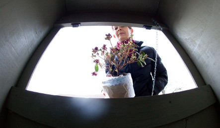 Artists create baby hatch for unwanted plants