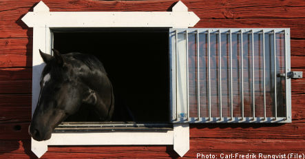 Swedish woman charged for housing horse in her cellar