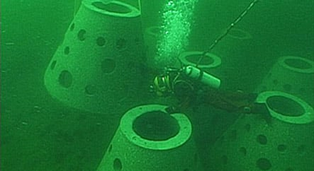 More artificial reefs planned in the North and Baltic seas