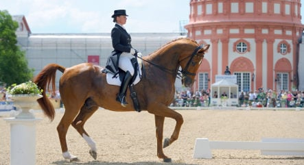 Another positive doping test for German equestrian team