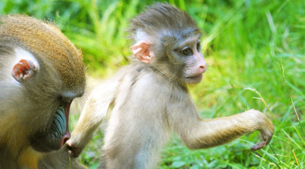 Zoo forced to rename primate called 'Obama'