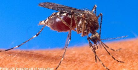 Swedish town overrun by mosquitoes