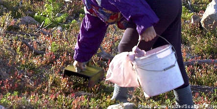 Berry pickers pluck unidentified cash stash