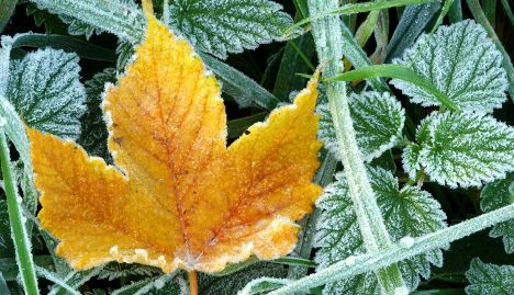 First autumn frost expected over the weekend