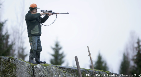 Wolves fair game as Sweden sets cull