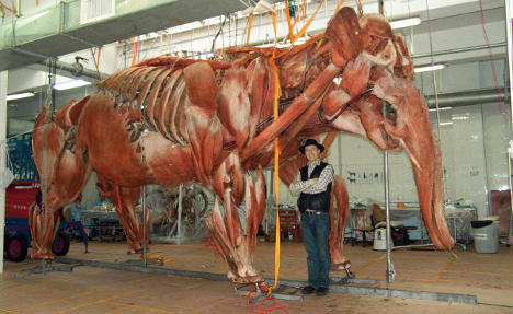 Zoo opens Body Worlds anatomical exhibition for animals