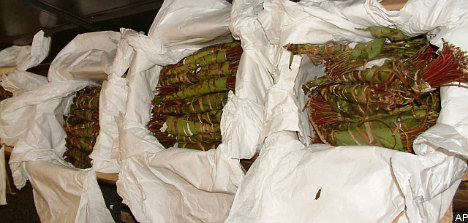 Government calls for action on khat use