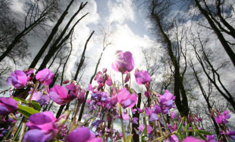 Spring hits speed bump but should recover for weekend