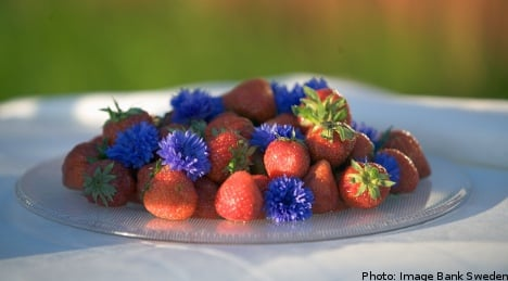 Swedes face up to Midsummer berry crisis