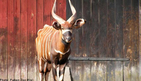 Zoo antelope may have starved to death