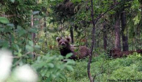 Bear family frightens peeing 11-year-old tourist