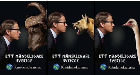 Hägglund takes election fight to the jungle