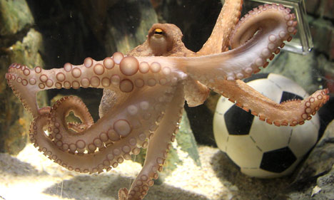 Paul the octopus picks England to host 2018 World Cup