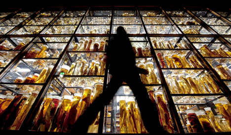 Berlin's Natural History museum celebrates 200th jubilee
