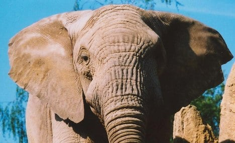 Police exonerate elephant for throwing woman across field