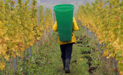 Small wine harvest to boost vintage's price