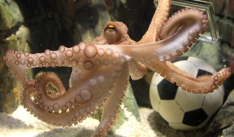 Paul the octopus oracle found dead