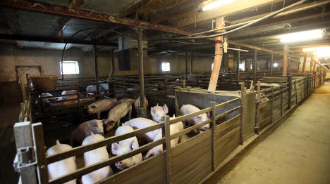 Farmers call for action amid €100 mln losses