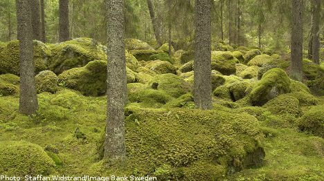 Green diesel harnesses Swedish forests