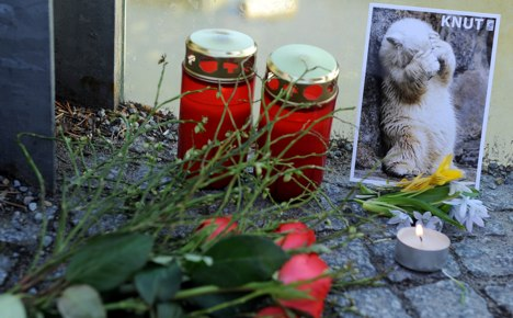 Autopsy searches for clues to Knut's untimely demise