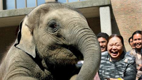 After Knut, Berlin Zoo loses young elephant