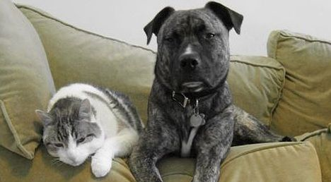 Allergies take their toll on household pets