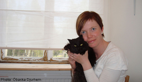 Lizzie the cat back after three years on the road