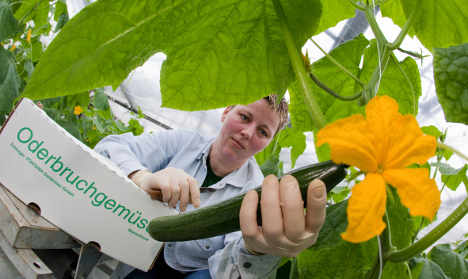 Salad growers to get half their losses in aid
