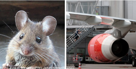 Mouse stops US-bound SAS flight in Stockholm