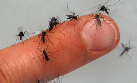 Germany faces insect infestation