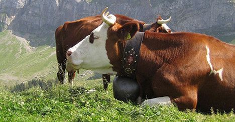 Number of Swiss farms continues to fall