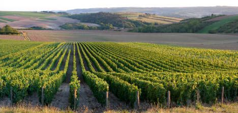 Wine growers call in help from satellites