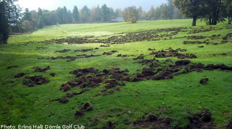 Piglets shot to the great fairway in the sky