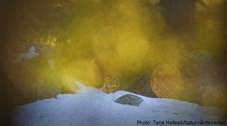 Nature snapper stripped of photo award