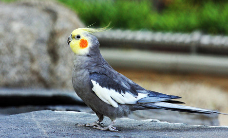 Bird doused with beer and stuffed in ticket vending machine