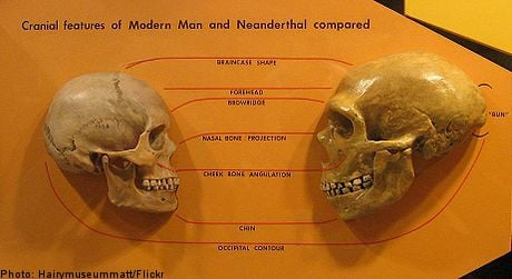 Humans bred with Archaic peoples: study