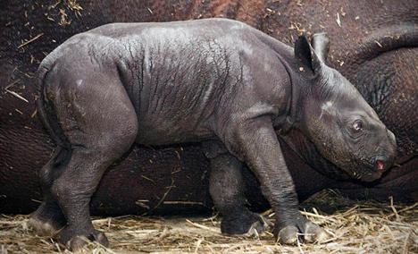 Search is on for baby rhino name