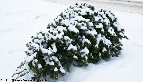 Tree-snatchers exposed by tracks in the snow