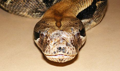 Snake on the loose on high speed train
