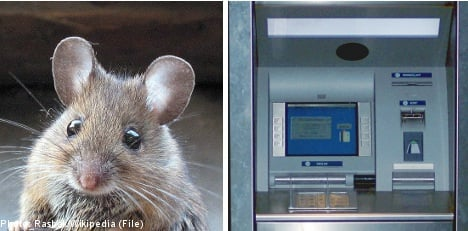 Man withdraws mouse from cash machine