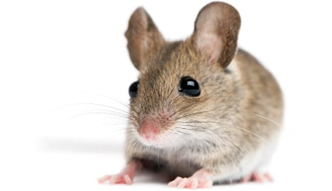 Stowaway mouse flies to Oslo solo
