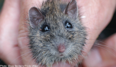 Rogue rodent keeps US SAS flight grounded
